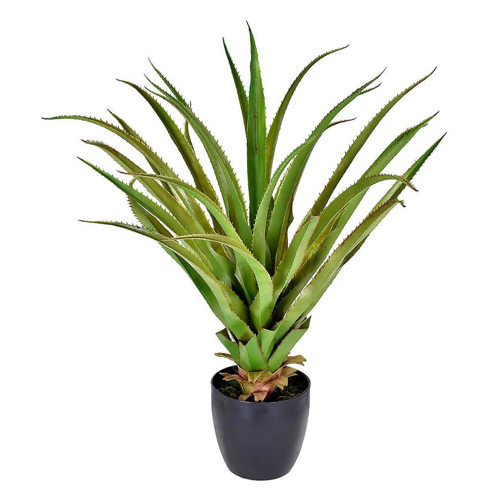 Palmeira Sisal X28 Folhas