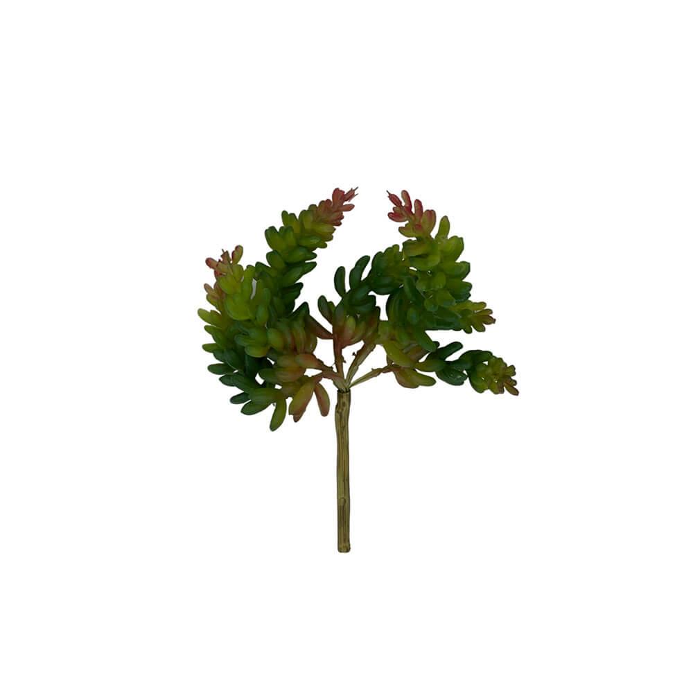 Planta-Suculenta-Dedinho-De-Moca